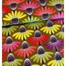 Love Always Echinacea Autumn Anna Maria Horner Rot Lila...